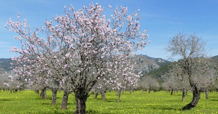 mallorca primavera